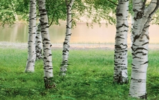 00381_Nordic_Forest_print