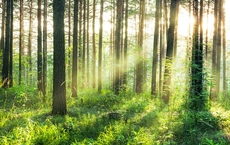 00964_Sunset_in_the_Woods_web